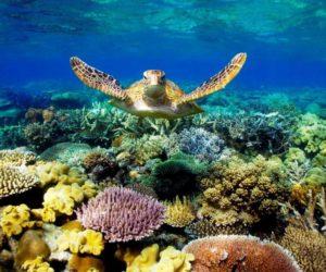 Australia & Oceano Pacifico